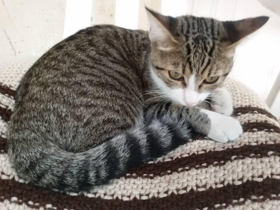 Il gatto di nonna olga dionigia